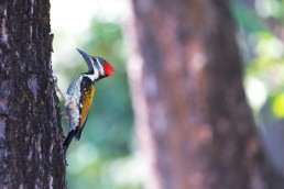 Confirmed Sighting - woodpecker